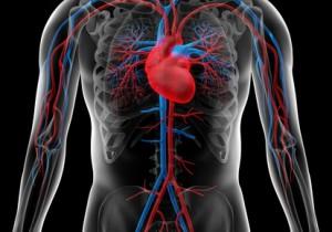 Kardiologen Berlin behandeln Herzinfarkt